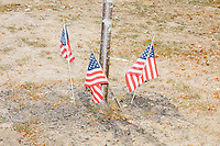 American flags stand in the dirt around a tree in Swampscott, Massachusetts, on Sat., Sept. 26, 2020.