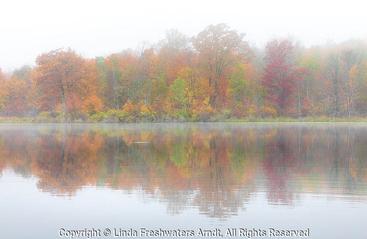 Fall colors on a foggy September morning in northern Wisconsin.