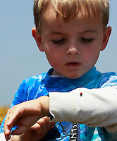 Mission Bay, Sunday April 20, 2008.  a young boy watches a Lady Bug on his shirt while on a family walk in the flowers blooming around Mission Bay.