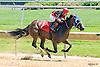 My Judith Marie winning at Delaware Park on 6/11/16