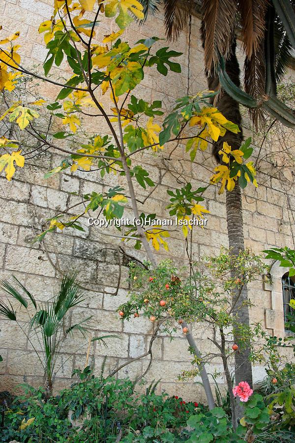 Israel, Jerusalem Mountaina. The garden at the Crusader Church in Abu Gosh