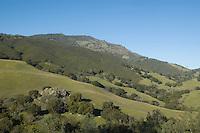Chaparral plant community, Mount Diablo State Park, California