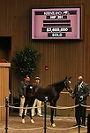 Hip #201 Medaglia d'oro - Quiet Dance 2011 filly consigned by Lane's End, agent for the complete dispersal of the Estate of Edward P. Evans (Spring Hill Farm) sold for $2,600,000 at the Keeneland November Sale.   From the Stakes producing mare, Quiet Dance, this filly is a half sister to Horse of the Year, Saint Liam.   .November 7, 2011.
