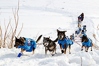 Noah Burmeister and team run up the hill from the Yukon River into at the Galena checkpoint during the 2017 Iditarod on Thursday afternoon March 9, 2017.<br /> <br /> Photo by Jeff Schultz/SchultzPhoto.com  (C) 2017  ALL RIGHTS RESERVED