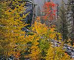 Aspen, Jennie Lakes Wilderness, Giant Sequoia National Monument, California