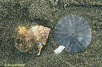 1Y37-001b  Ocean - shell and sand dollar on beach
