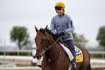 October 28, 2015:  Keen Ice, trained by Dale L. Romans and owned by Donegal Racing, exercises in preparation for the Breeders' Cup Classic at Keeneland Race Track in Lexington, Kentucky on October 28, 2015. Jon Durr/ESW/CSM
