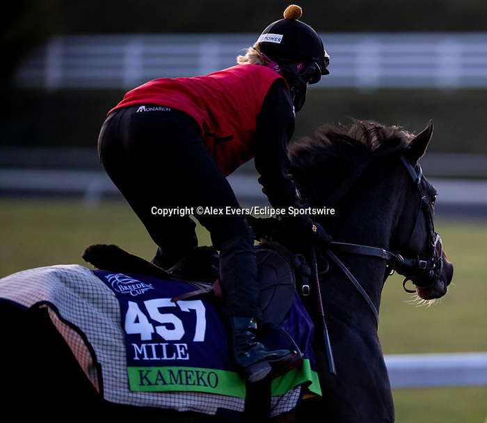 November 3, 2020: Kameko gallops on the training track at Keeneland Racetrack in Lexington, Kentucky on November 3, 2020. Alex Evers/Eclipse Sportswire/Breeders Cup