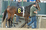 #6 Euphrosyne before the running of the Honeybee Stakes (Grade III) at Oaklawn Park in Hot Springs, Arkansas-USA on March 8, 2014. (Credit Image: © Justin Manning/Eclipse/ZUMAPRESS.com)