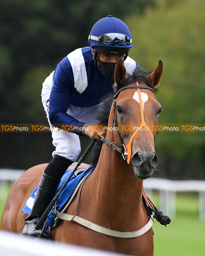 Bay of Whispers ridden by Sean Levey goes down to the start of The Irish Stallion Farms EBF Fillies' Nursery Stakes      during Horse Racing at Salisbury Racecourse on 11th September 2020