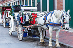 Horse and carriage decorated for Christmas at the Faneuil Hall Marketplace, Boston, Massachusetts, USA