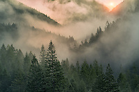 Sunrise through fog in mountains near Opal Creek, Oregon