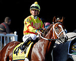 ARLINGTON HEIGHTS, IL - AUGUST 13: Pumpkin Rumble #4, ridden by Mitchell Murrill, during the post parade beforeArlington Million at Arlington International Racecourse on August 13, 2016 in Arlington Heights, Illinois. (Photo by Jon Durr/Eclipse Sportswire/Getty Images)
