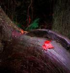 Red Leaf on Tree