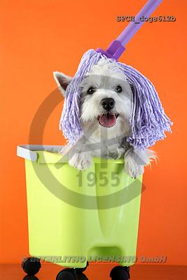 Xavier, ANIMALS, dogs, photos(SPCHdogs612b,#A#) Hunde, perros