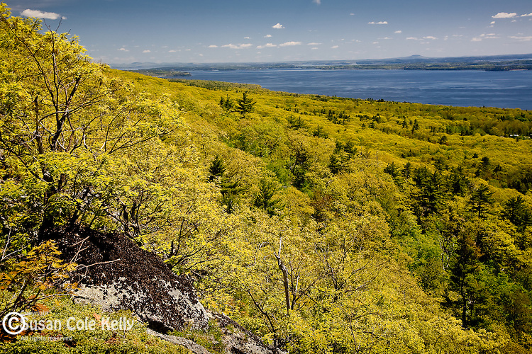 Spring foliage covers Camden Hills State Park, ME, USA