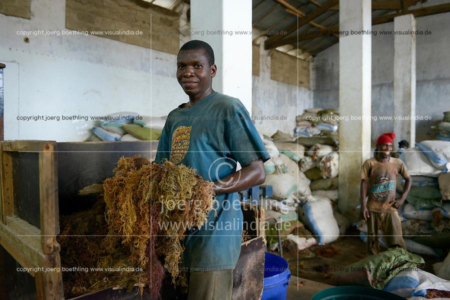 TANZANIA, Zanzibar, Stone town, packaging, storage and export of seaweed or red algae