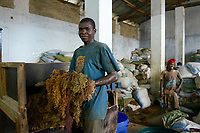 TANZANIA, Zanzibar, Stone town, packaging, storage and export of seaweed or red algae