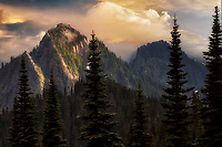 Tatoosh Mountaints and subalpine fir trees. Mt. Rainier National Park, Washington