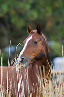 horse in wildwest Oregon USA