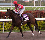 30 January 2010: and jockey after the Sunshine Millions Turf Stakes at Gulfstream Park in Hallandale Beach, FL.