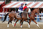 Zanotti in the post parade as Yoshida (no. 1), wins the Woodward Stakes (Grade 1), Sep. 1, 2018 at the Saratoga Race Course, Saratoga Springs, NY.    Ridden by  Joel Rosario, and trained by William Mott,  Yoshinda finished 2 lengths in front of Gunnevera (No. 9). (Bruce Dudek/Eclipse Sportswire)