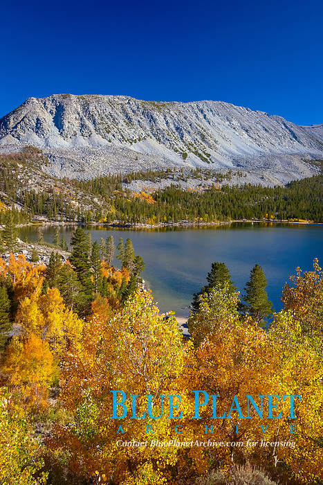 Mount Morgan and Rock Creek Lake with changing aspens, fall colors, autumn.