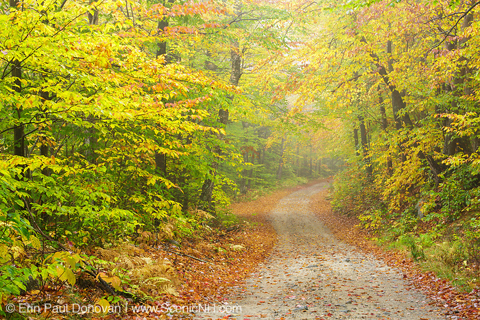 Sandwich Notch Road in Sandwich, New Hampshire USA on a foggy autumn morning. This historic route was established in 1801.