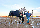 Hansen wins 2012 Gotham Stakes at Aqueduct Race Track, Ozone Park, Queens, NY