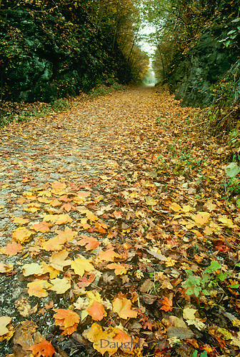 Walking trail from Rails to Trails project in fall, USA