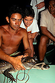 Rio Negro, Amazonas State, Brazil. Local guide showing a captured cayman to tourists before releasing it.