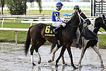 NEW ORLEANS, LA - JANUARY 21:<br />  Chocolate Ride #6 ridden by Florent Geroux in the post parade before the Colonel E.R. Bradley Handicap at the Fairgrounds Race Course on January 21,2017  in New Orleans, Louisiana. (Photo by Steve Dalmado/Eclipse Sportswire/Getty Images)