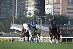 SHA TIN,HONG KONG-DECEMBER 09: Japanese contenders (Red Falx(left) and Queens Ring(right)) at Sha Tin Racecourse on December 9,2016 in Sha Tin,New Territories,Hong Kong (Photo by Kaz Ishida/Eclipse Sportswire/Getty Images)