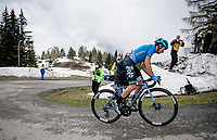 eventual stage winner Lorenzo Fortunato (ITA/EOLO-Kometa) up the final part of the Monte Zoncolan <br /> <br /> 104th Giro d'Italia 2021 (2.UWT)<br /> Stage 14 from Cittadella›Monte Zoncolan (205km)<br /> <br /> ©kramon