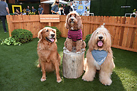 """LOS ANGELES - JULY 30: Finn Bodey, Gracie and Newman attend the premiere event for National Geographic's """"Cesar Millan: Better Human, Better Dog"""" at the Westfield Century City Mall Atrium on July 30, 2021 in Los Angeles, California. (Photo by Stewart Cook/National Geographic/PictureGroup)"""