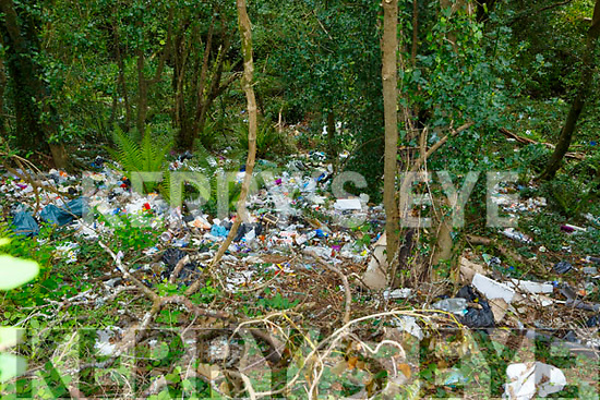 The site of the illegal dumping on Mill Road Killarney