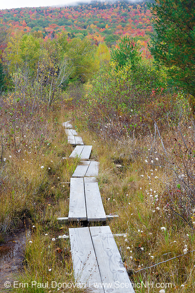 Puncheons (bog bridges) on trail near Wildlife Pond in Bethlehem, New Hampshire USA during the autumn months