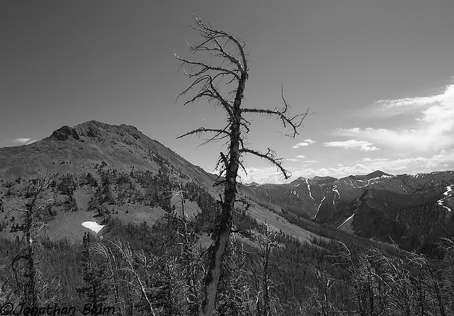Dead Tree, Avalanche Peak