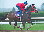 October 24, 2015 :  Private Zone, trained by Jorge Navarro and owned by Good Friends Stable, exercises in preparation for the Breeders' Cup Sprint at Keeneland Race Track in Lexington, Kentucky on October 24, 2015.  Scott Serio/ESW/CSM