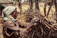 Niger, Tonkassare Village, West Africa.  Young Fulani Man Building Fence using Millet Stalks.