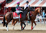 Tequilita in the post parade as Marley's Freedom (no. 7) wins the Ketel One Ballerina  Stakes (Grade 1), Aug. 25, 2018 at the Saratoga Race Course, Saratoga Springs, NY.  Ridden by  Mike Smith, and trained by Bob Baffert, Marley's Freedom finished 3 3/4 lengths in front of Still There (No. 3).  (Bruce Dudek/Eclipse Sportswire)