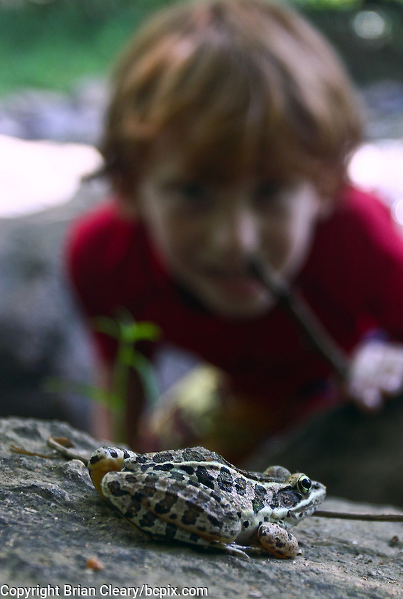 A boy watches a Southern Leopard Frog,  Eno River State Park, near Durham, NC, August 2009.  (Photo by Brian  Cleary/www.bcpix.com)
