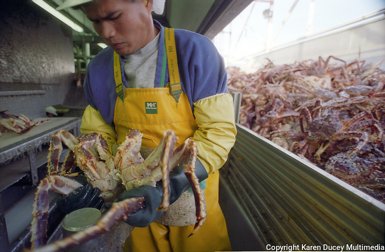 """A processor halves a red king crab at the Unisea processing plant in Dutch Harbor, Alaska in October 1994.  The Bering Sea is known for having the worst storms in the world. Crab fishing in the Bering Sea is considered to be one of the most dangerous jobs in the world.  This fishery is managed by the Alaska Department of Fish and Game and is a sustainable fishery.  The Discovery Channel produced a TV series called """"The Deadliest Catch"""" which popularized this fishery."""