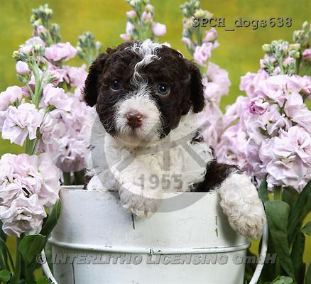 Xavier, ANIMALS, dogs, photos(SPCHdogs638,#A#) Hunde, perros
