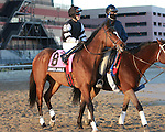 James Jingle post parade.  Favorite Vyjack with Cornelio Velasquez holds off 41 - 1 longshot Siete de Oros to win143rd running of the Grade II Jerome Stakes for 3-year olds, going 1 mile 70 yards on the inner dirt, at Aqueduct Racetrack.  Trainer Rudy Rodriguez.  Owner Pick Six Racing **