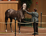 Hip #92 Dance Quietly consigned by Lane's End, agent for the complete dispersal of the Estate of Edward P. Evans (Spring Hill Farm) sold for $2,000,000 to Besilu Stables at the Keeneland November Sale on November 7, 2011.