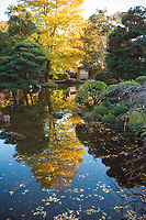 Japanese Tea Garden, Golden Gate Park, San Francisco. Reflective pond.