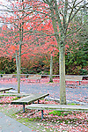Empty park benches sit in fall color.  In urban Stanley Park, the promenade takes walkers, bikers, and bladers past the downtown skyline and lush natural gardens.