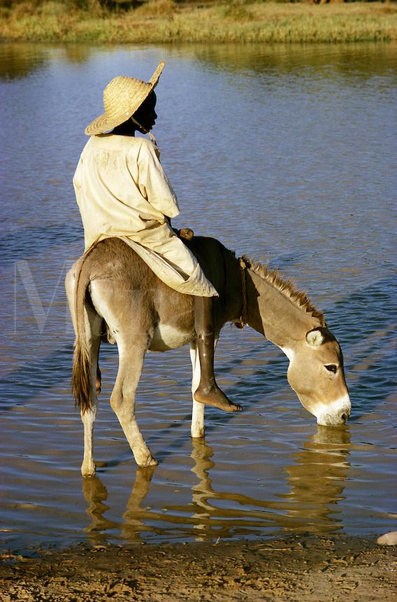 Boy on donkey drinking water in pool in Burkina Faso, Africa..