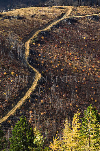 A road through a clearcut forest in Montana